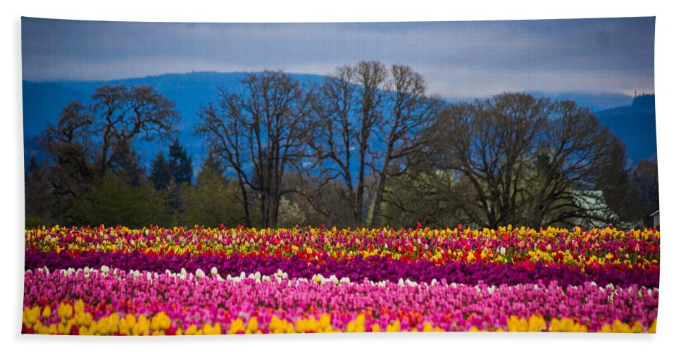 Tulips Bath Sheet featuring the photograph Spring's Laugh by Patricia Babbitt