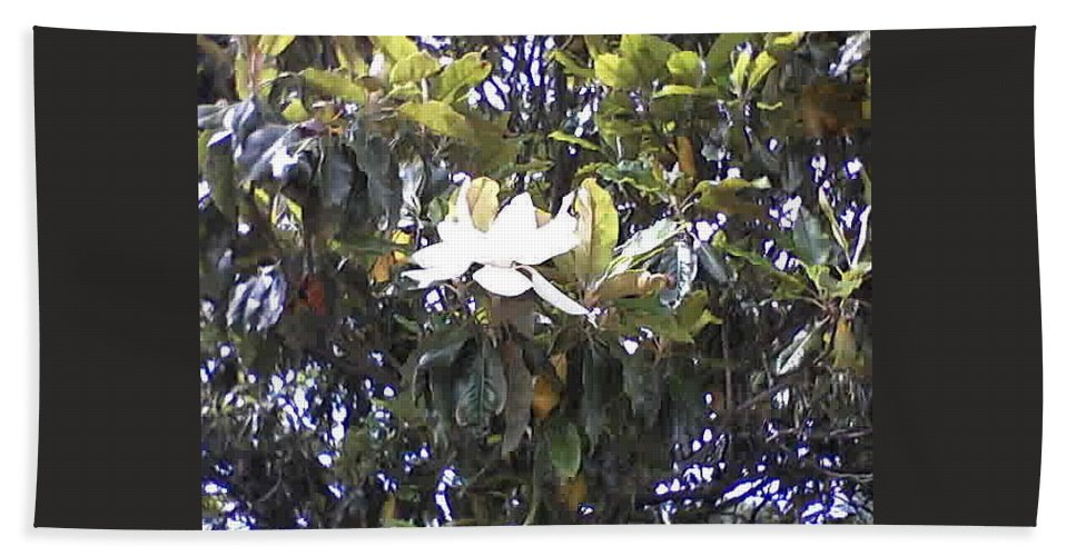 Spring Flowers Hand Towel featuring the photograph Springtime Magnolia by Suzanne Berthier
