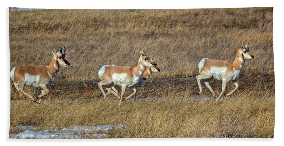 Cypress County Bath Sheet featuring the photograph Sprinting Pronghorn by James Anderson