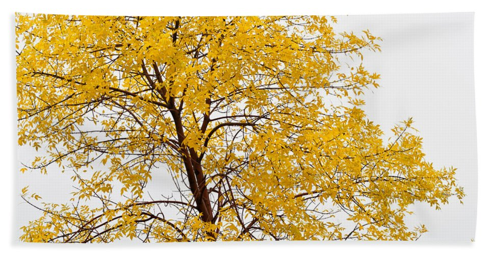Autumn Hand Towel featuring the photograph Square Tree by U Schade