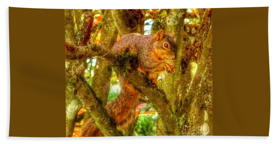 Squirrel With Acorn Hand Towel featuring the photograph Squirrel Away Acorn by Susan Garren