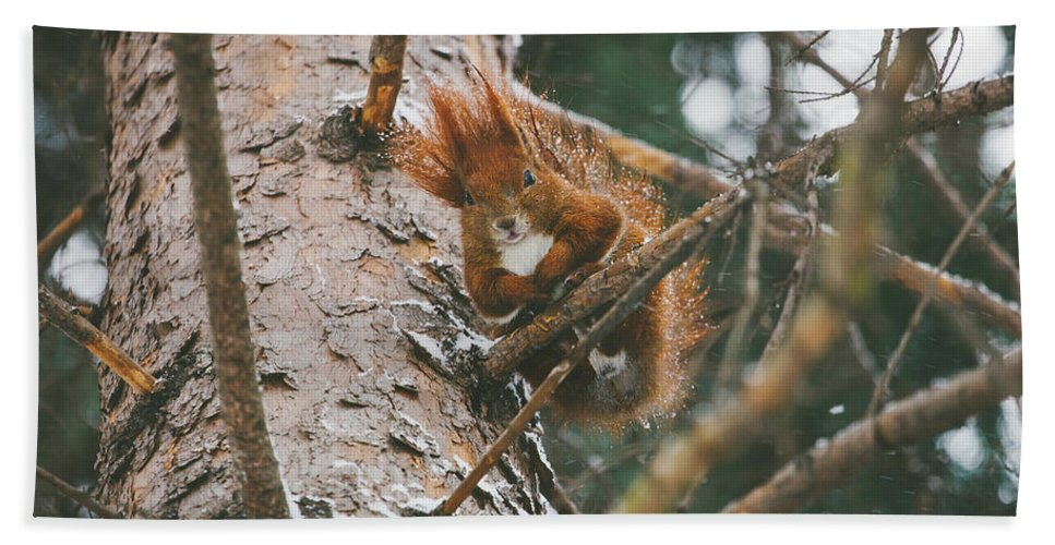 Squirrels Bath Sheet featuring the photograph Squirrel In A Tree by Pati Photography