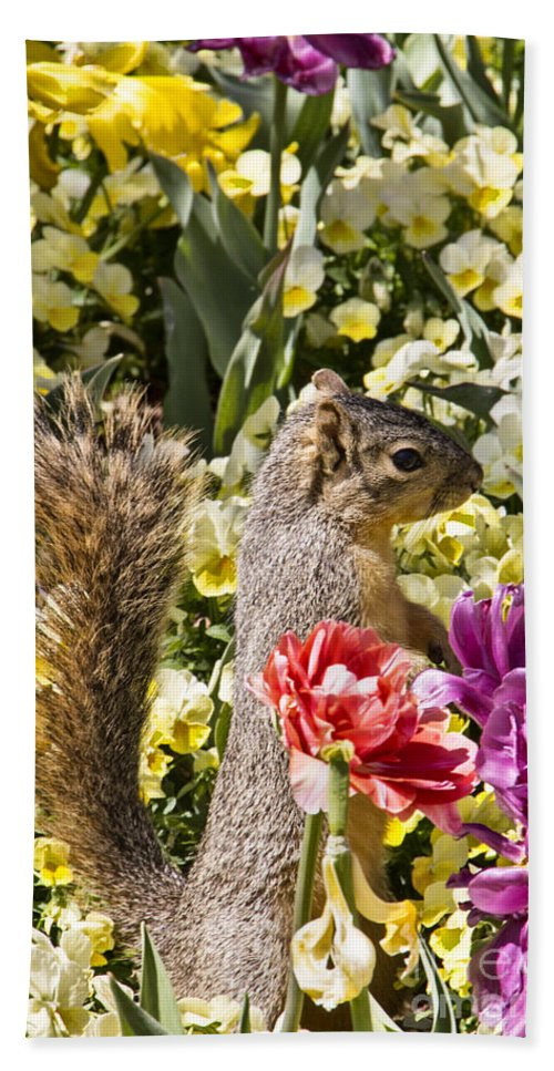 Squirrel Hand Towel featuring the photograph Squirrel In The Botanic Garden-dallas Arboretum V4 by Douglas Barnard