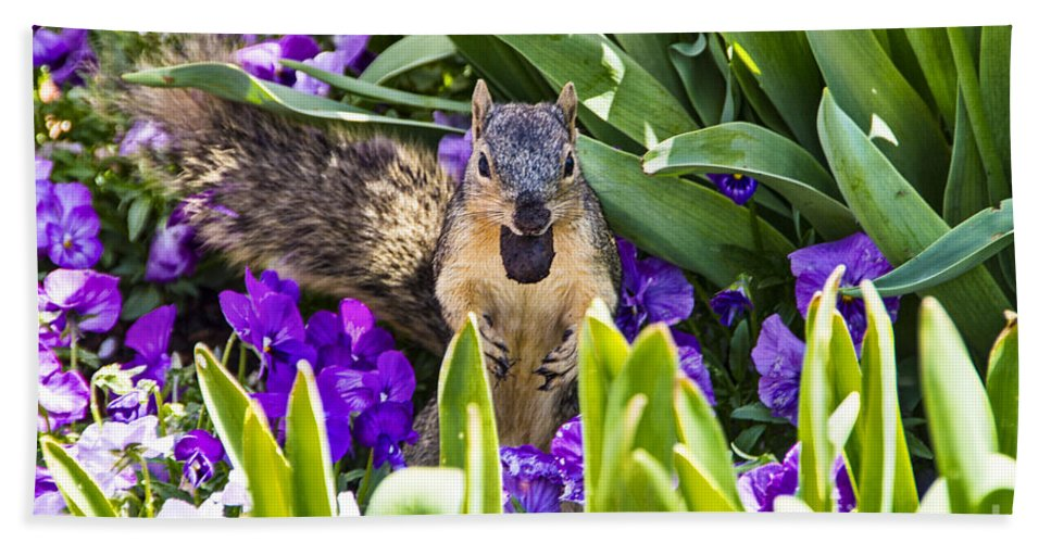 Squirrel Hand Towel featuring the photograph Squirrel In The Botanic Garden by Douglas Barnard