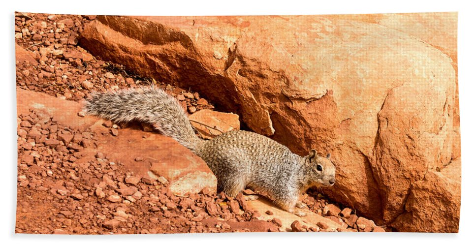 Grand Canyon Hand Towel featuring the photograph Squirrel by Jamie Heeke