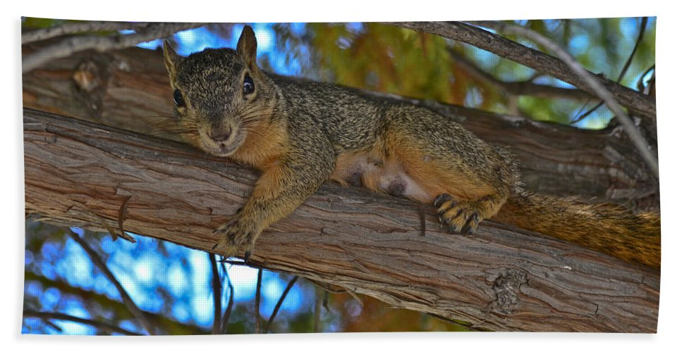 Squirrel Bath Sheet featuring the photograph Squirrel Looking Down On Viewer by Allen Sheffield