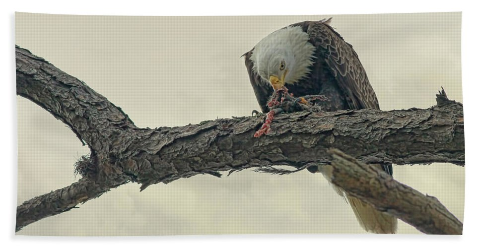 Eagle Bath Sheet featuring the photograph Squirrel Lunch by Deborah Benoit