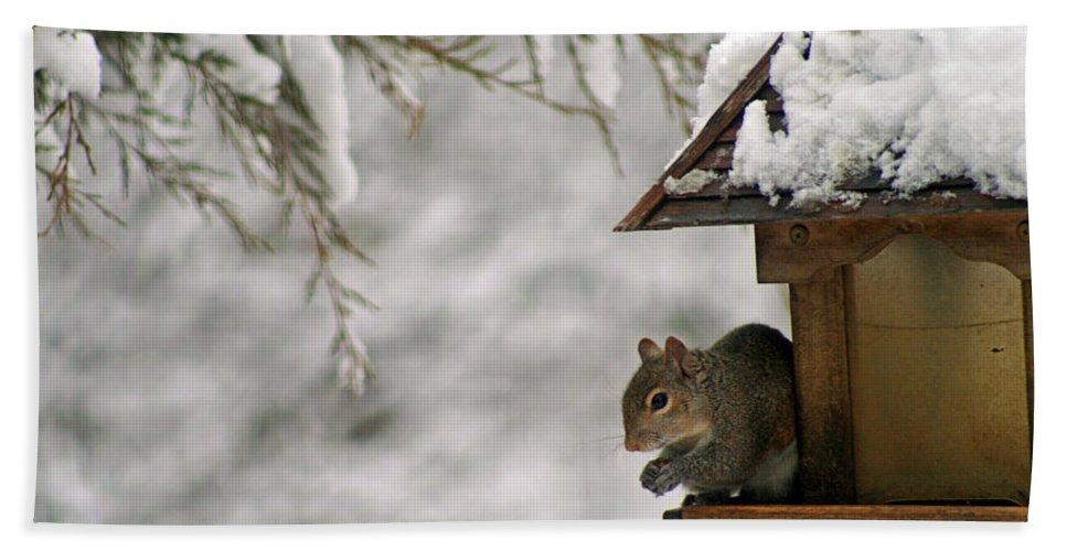 Squirrel Bath Sheet featuring the photograph Squirrel On The Bird Feeder by Karen Adams