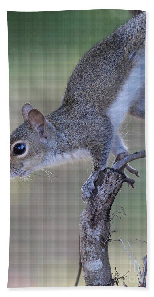 Squirrel Hand Towel featuring the photograph Squirrel Pose by Deborah Benoit
