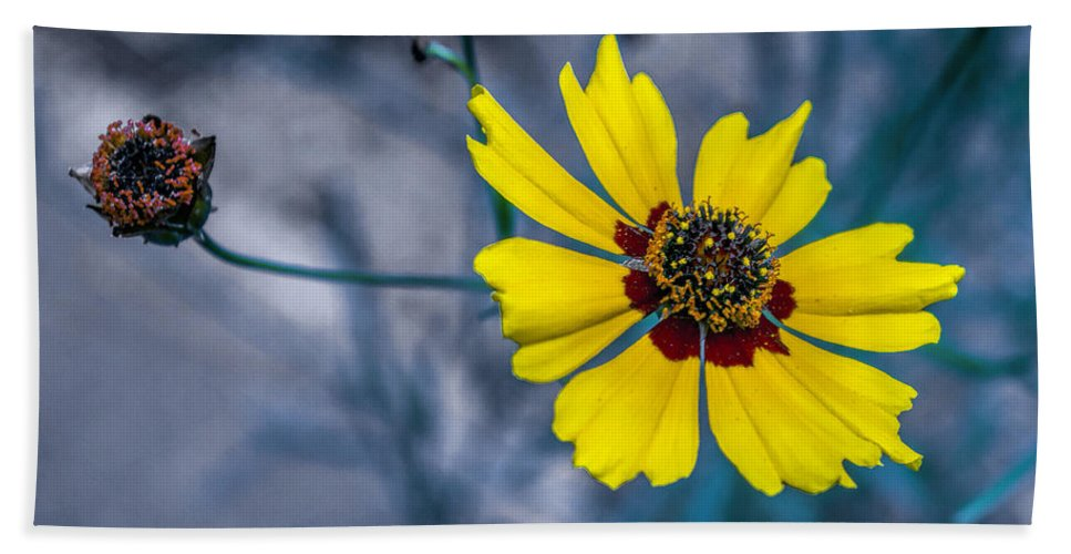 Wild Flower Hand Towel featuring the photograph Stages Of Life by John Dauer