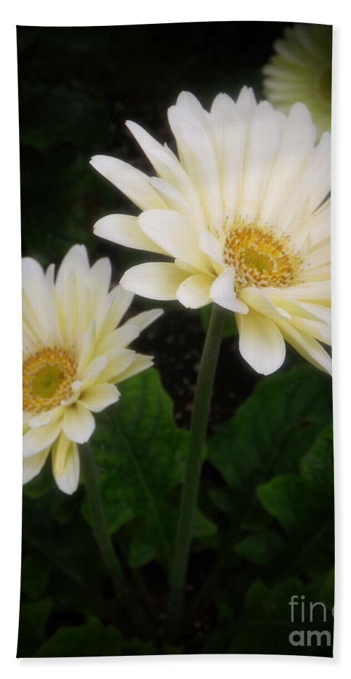 Botany Hand Towel featuring the photograph Stand By Me Gerber Daisy by Lingfai Leung
