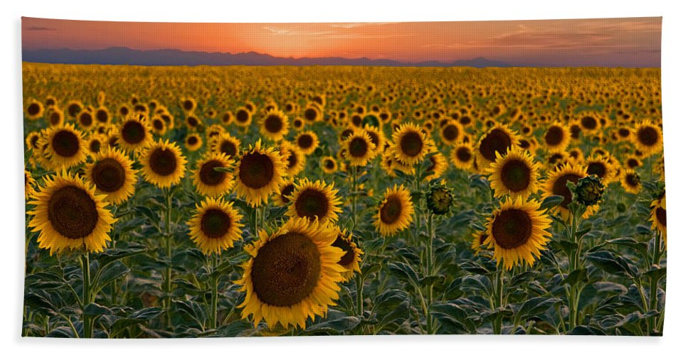 Sunflower Hand Towel featuring the photograph Standing At Attention by Ronda Kimbrow
