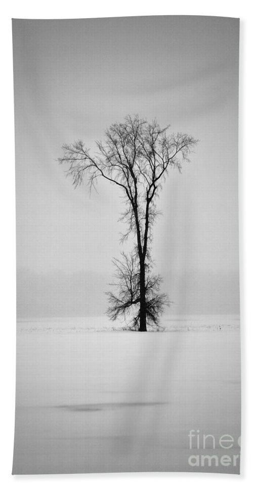 Elm Tree Bath Towel featuring the photograph Standing Strong by Joshua McCullough