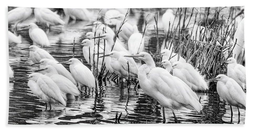 Birds Hand Towel featuring the photograph Standing Strong by Scott Hansen