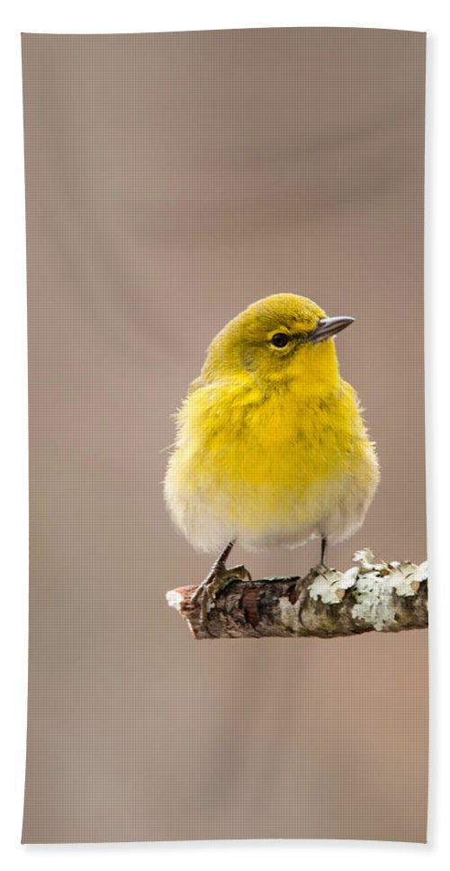 Setophaga Pinus Hand Towel featuring the photograph Standing Tall - Pine Warbler by Christy Cox