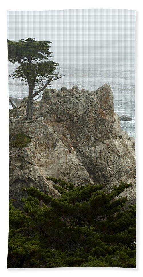 Monterey California Hand Towel featuring the photograph Standing Tall by Robert Mollett