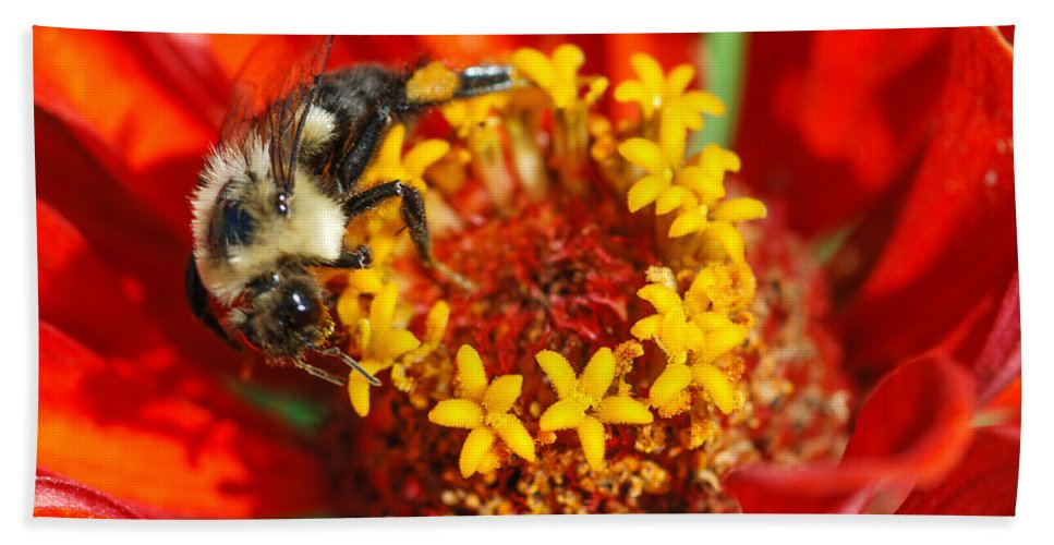 Bee Bath Towel featuring the photograph Star Gazing by Optical Playground By MP Ray