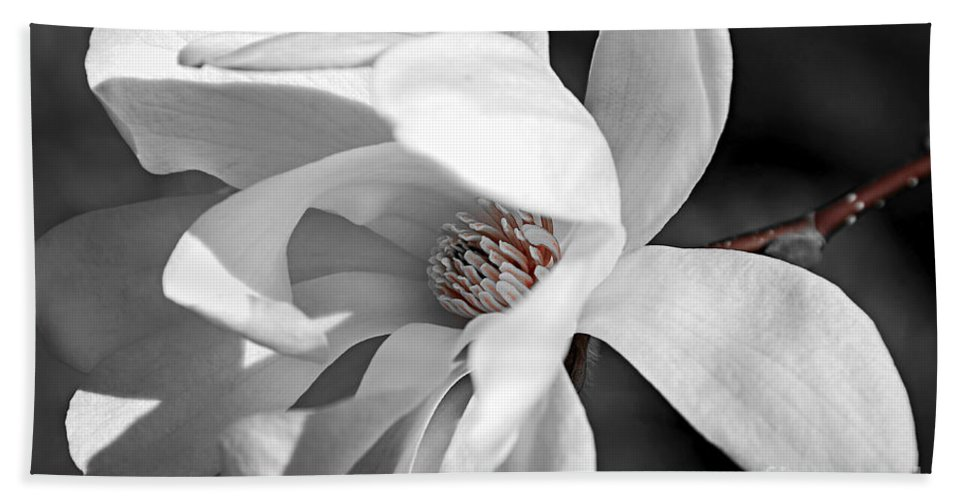 Magnolia Hand Towel featuring the photograph Star Magnolia Flower by Elena Elisseeva