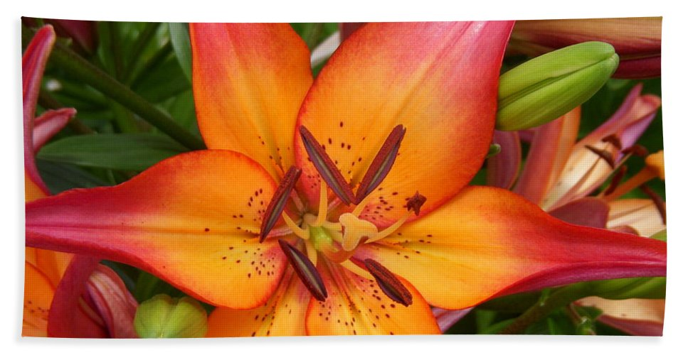 Asiatic Lily Bath Sheet featuring the photograph Starburst by Terri Waselchuk