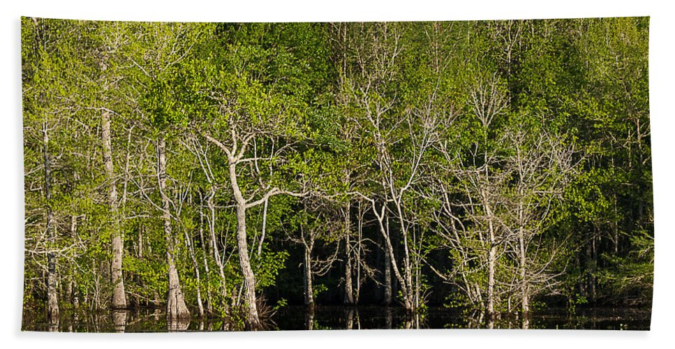 Vernon Lake Hand Towel featuring the photograph Stark Trees by Ken Frischkorn