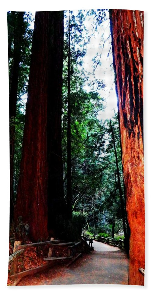 Muir Woods National Monument Bath Sheet featuring the photograph Stately by Cathleen Cario-Reece