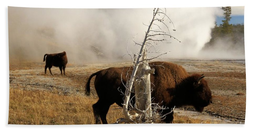 Vent Geyser Hand Towel featuring the photograph Steaming Bison by Adam Jewell