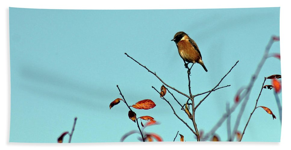Stonechat Hand Towel featuring the photograph Stonechat by Tony Murtagh