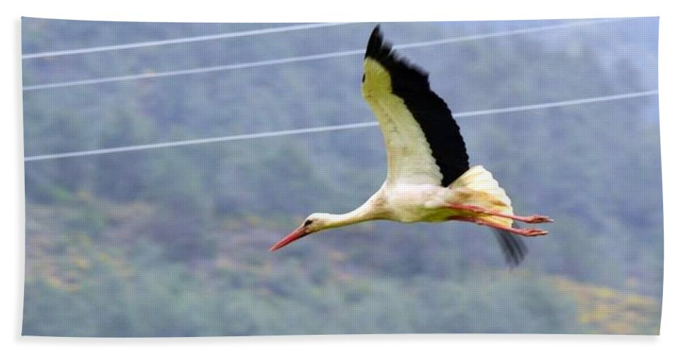 White Stork Bath Sheet featuring the photograph Stork In Flight by Taiche Acrylic Art