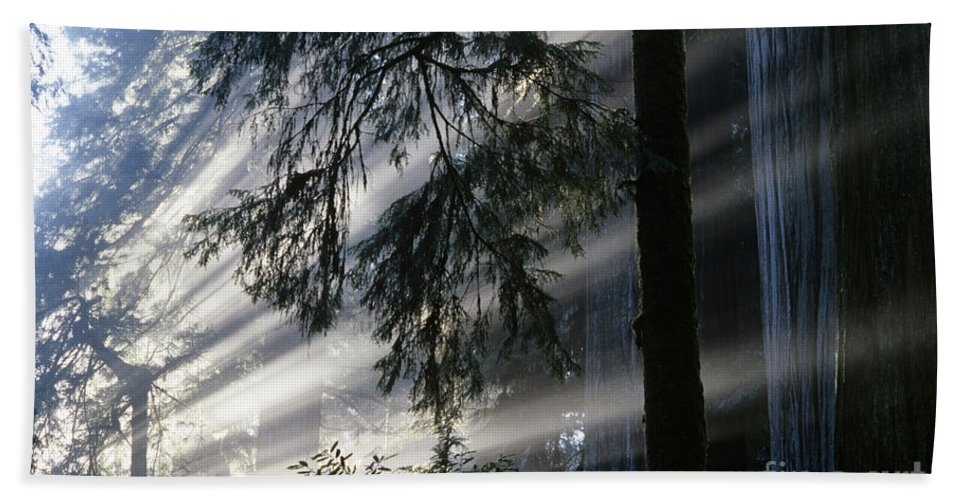Nobody Hand Towel featuring the photograph Stout Grove Redwoods With Sunrays Breaking Through Fog by Jim Corwin