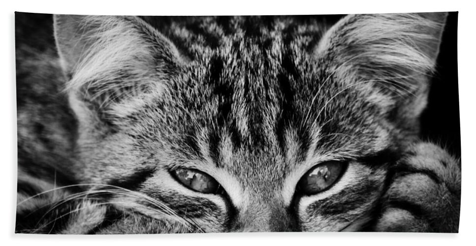 Kitten Bath Sheet featuring the photograph Stray Kitten by Brothers Beerens