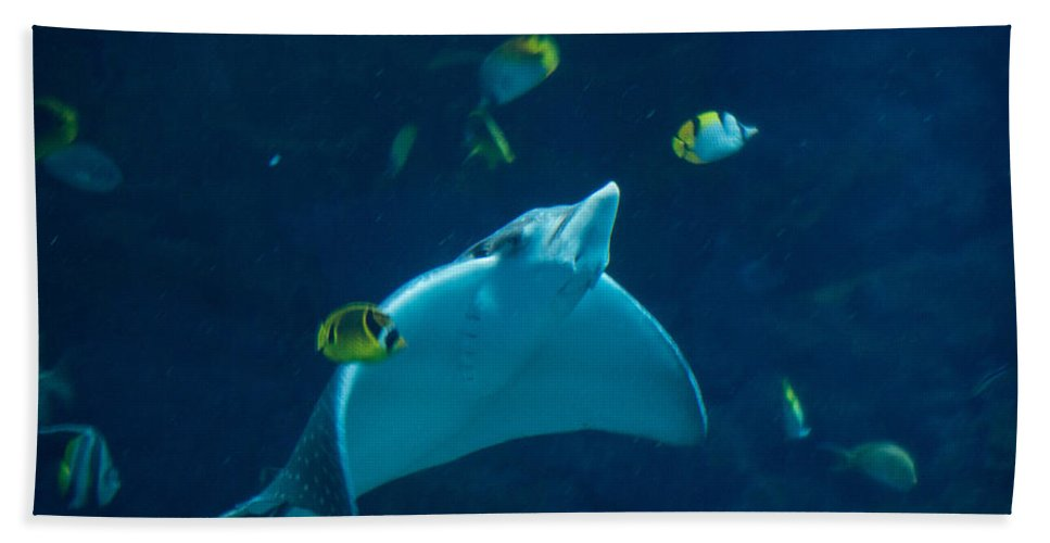Texas Hand Towel featuring the photograph Streamlined Stingray by JG Thompson