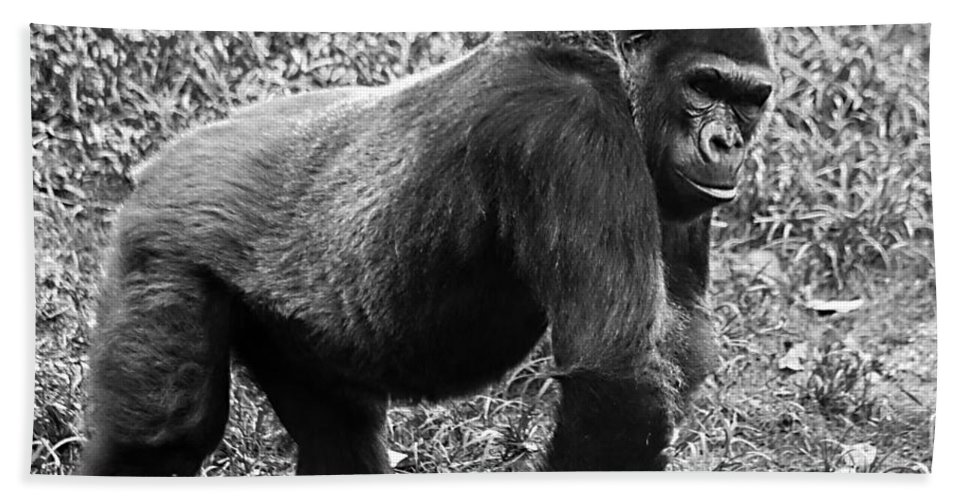 Chimpanzee Hand Towel featuring the photograph Strength by Ken Frischkorn