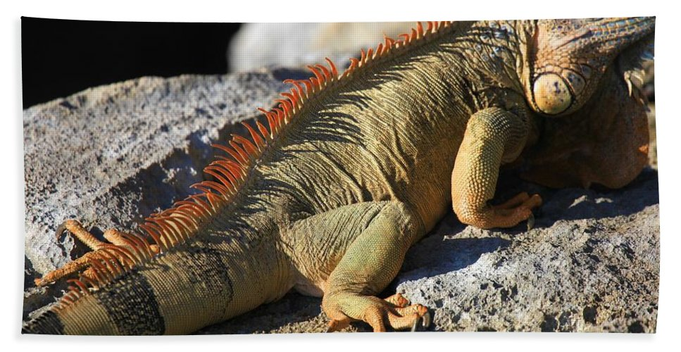 Iguana Bath Sheet featuring the photograph Stretched Out by Adam Jewell
