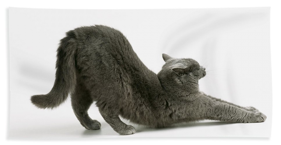 Cat Hand Towel featuring the photograph Stretching Cat by John Daniels