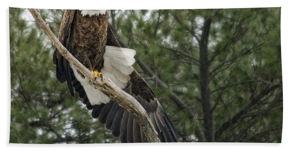 Eagle Hand Towel featuring the photograph Stretching by Claudia Kuhn