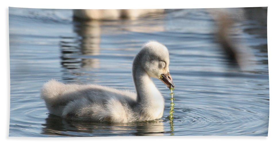 Trumpeter Swan Hand Towel featuring the photograph String Of Pearls by Teresa McGill