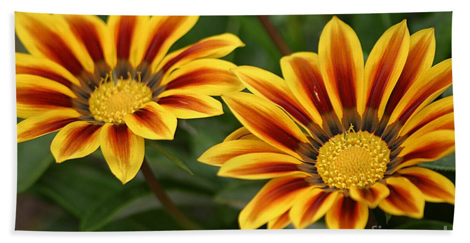 Gazania Hand Towel featuring the photograph Striped Gazania by Living Color Photography Lorraine Lynch