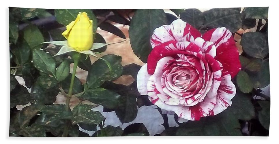 Striped Rose And Yellow Bath Sheet featuring the painting Striped Rose And Yellow by Usha Shantharam