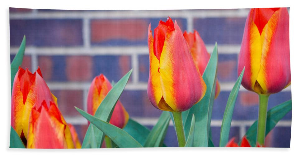 Flowers Hand Towel featuring the photograph Striped Tulips by Debra Powell