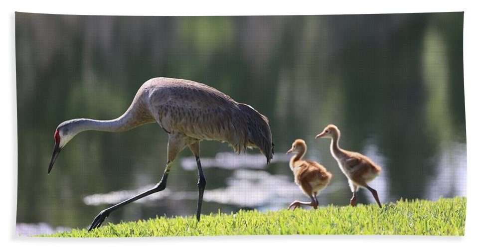 Sandhill Cranes Bath Sheet featuring the photograph Stroll By The Pond by Carol Groenen