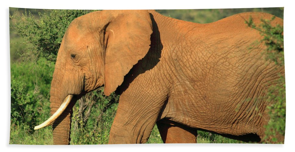 Africa Bath Sheet featuring the photograph Strolling Elephant by Deborah Benbrook