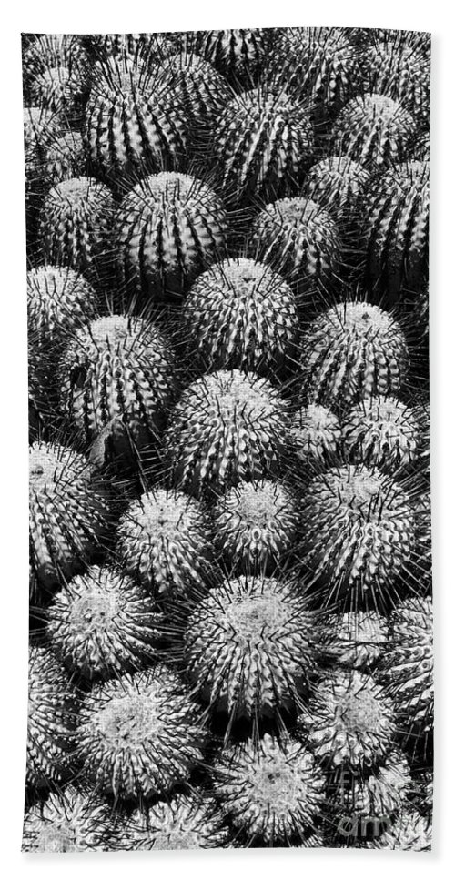 Cactus Bath Sheet featuring the photograph Study In Spines 2 by James Brunker