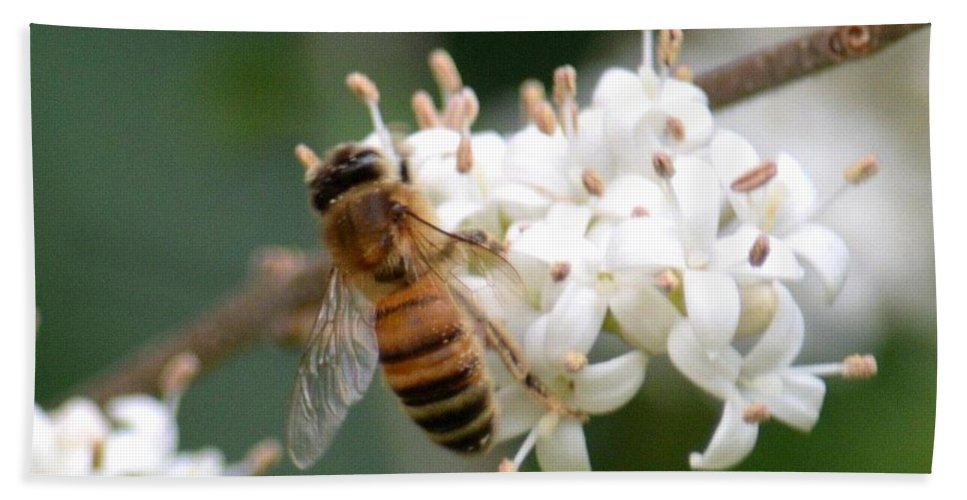 Study Of A Bee Bath Sheet featuring the photograph Study Of A Bee by Maria Urso