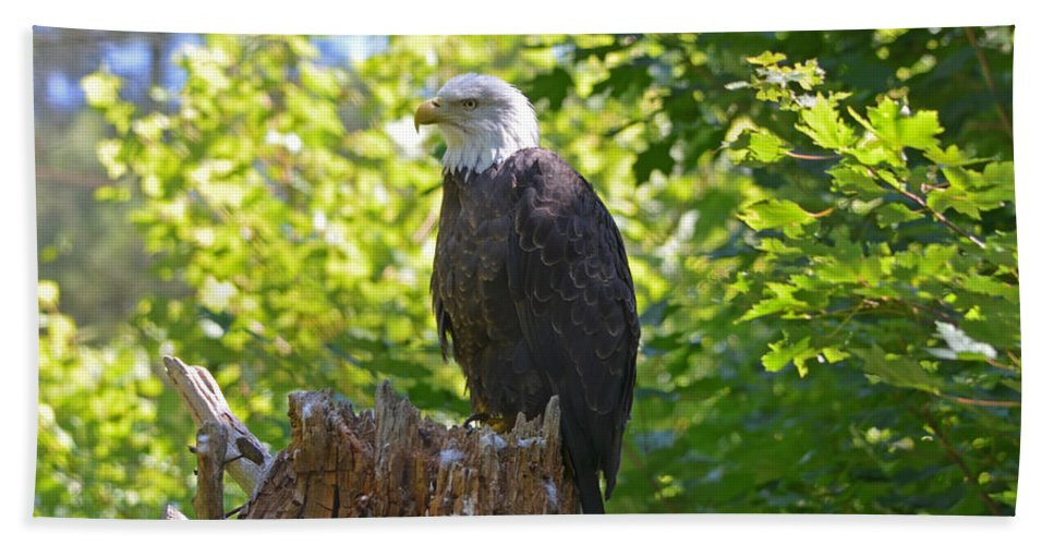 Bald Eagle Hand Towel featuring the photograph Stumped by David Porteus