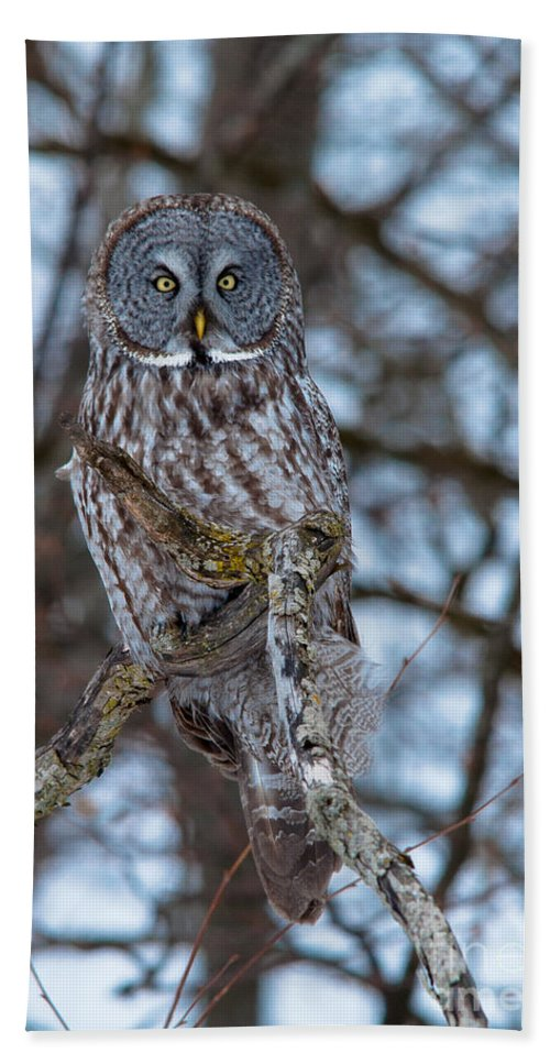 Owls Hand Towel featuring the photograph Stunning by Cheryl Baxter