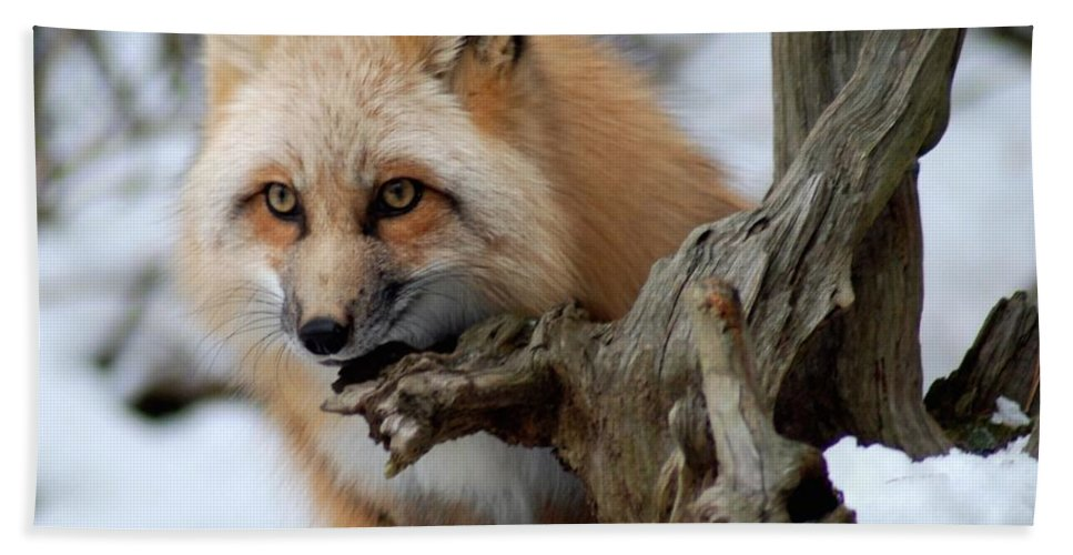 Fox Bath Sheet featuring the photograph Stunning Sierra by Richard Bryce and Family
