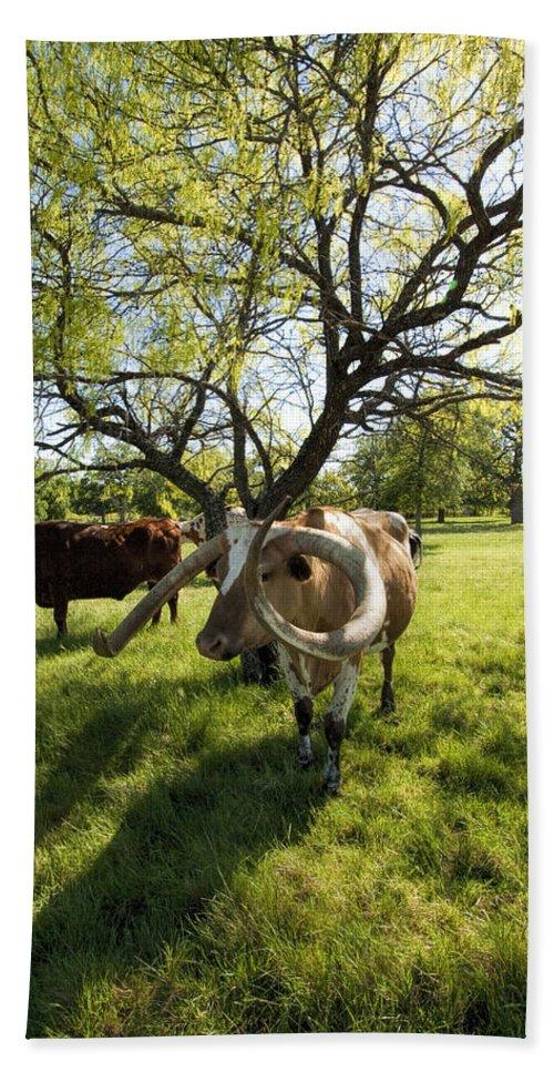 Longhorns Bath Sheet featuring the photograph Stunning Texas Longhorns by Kathy Clark