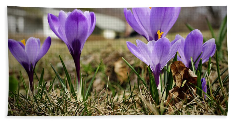 Spring Hand Towel featuring the photograph Suburban Spring by Luke Moore