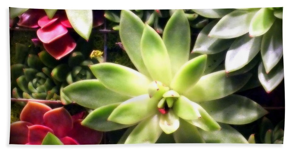Florals Hand Towel featuring the photograph Succulent Beauties by Karen Wiles