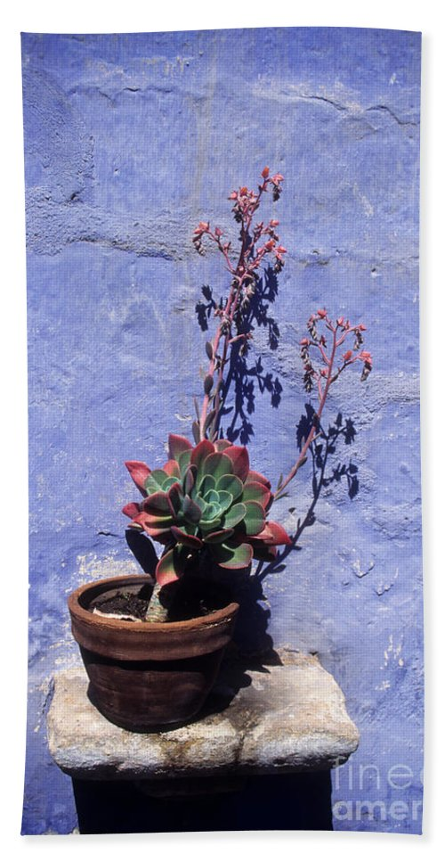South America Hand Towel featuring the photograph Succulent Blue by James Brunker